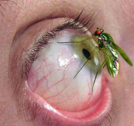 ojo al mosquito